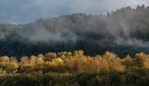 Fall Color Report - Klamath River and Berry Summit